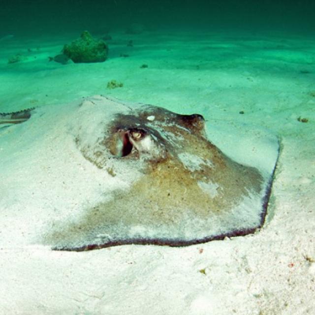 Swim with Stingrays at Gibbs Cay