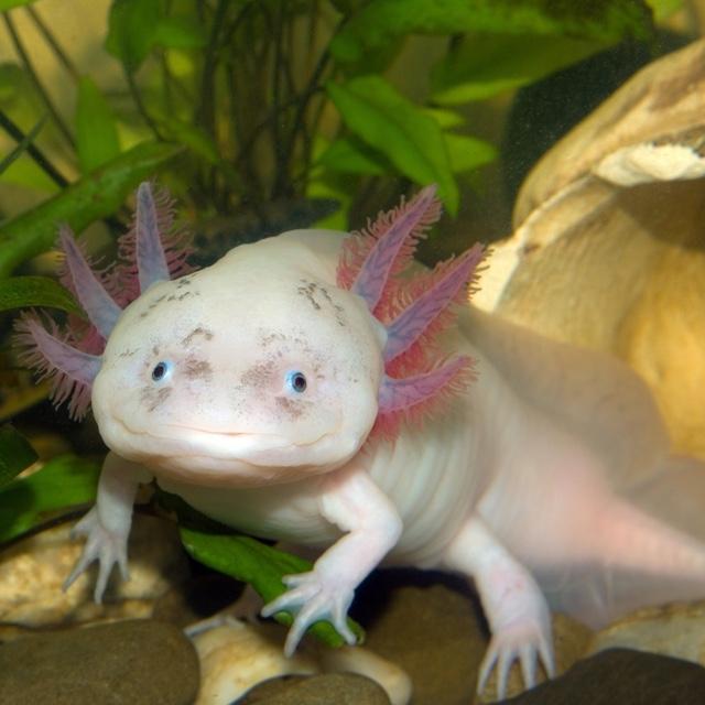 Hunt for Salamanders at Cecret Lake