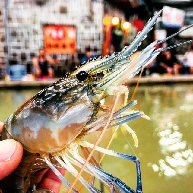 Go Urban Shrimp Fishing