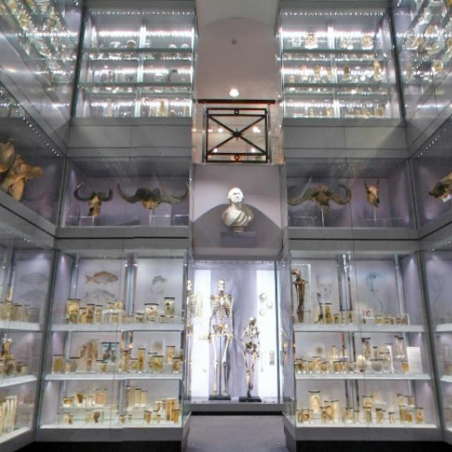 Hunterian Museum London