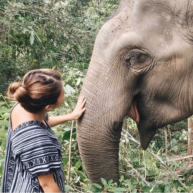Visit an Elephant Sanctuary