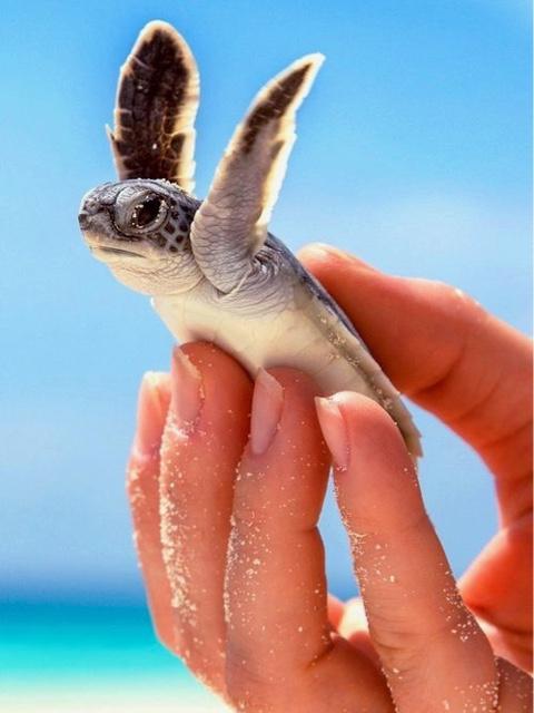 Cayman