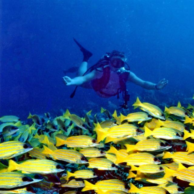 Dive in Banana Reef