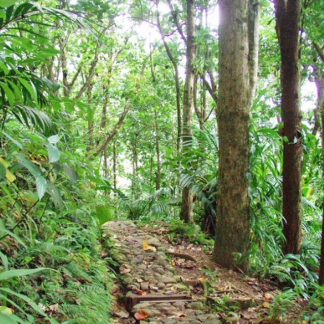 Hiking the Enbas Saut Waterfall Trail in Edmund Rain Forest Reserve