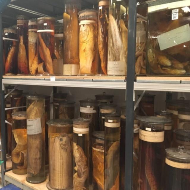 Darwin Centre Spirit Collection