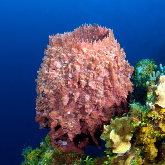 Bloody Bay Marine Reserve in Little Cayman