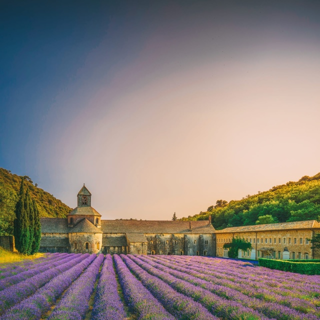 Tour a French Vineyard