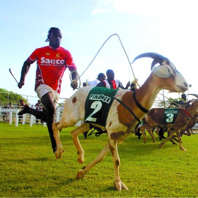 Tobago Goat & Crab Races