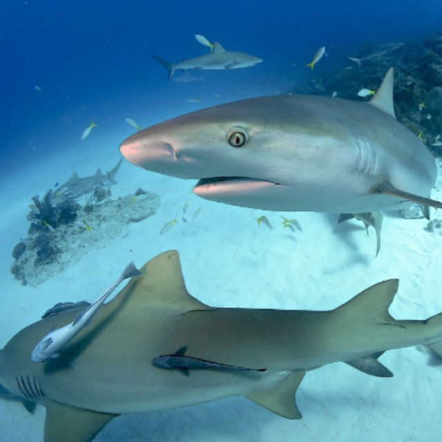 Shark Dive at Dubai Mall Aquarium and Underwater Zoo