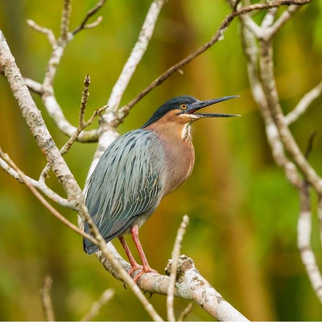 Explore Mangroves Bon Accord Lagoon