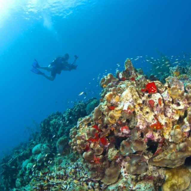 Diving in Anse Chastanet Marine National Park