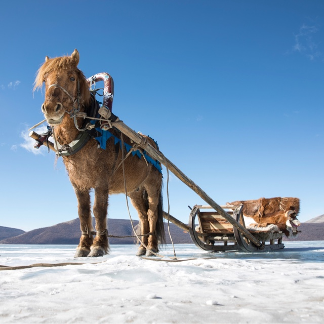 Explore the Altai Mountains by Horse
