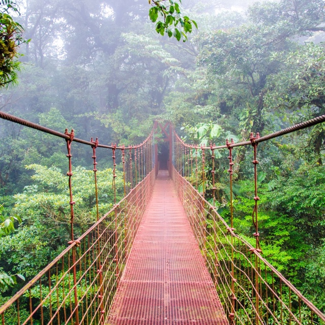 The Hanging Bridges of Cloud Forest