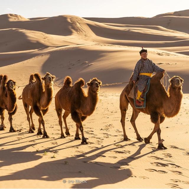 Ride a camel in the Gobi Desert