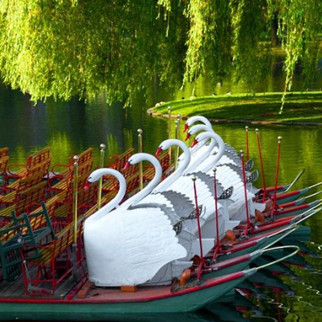 Swan Boat Ride in Boston Public Garden