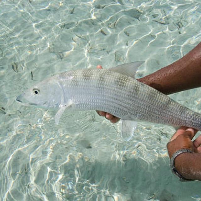 Bonefishing