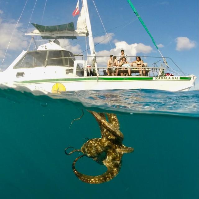 Catamaran Snorkeling Tour