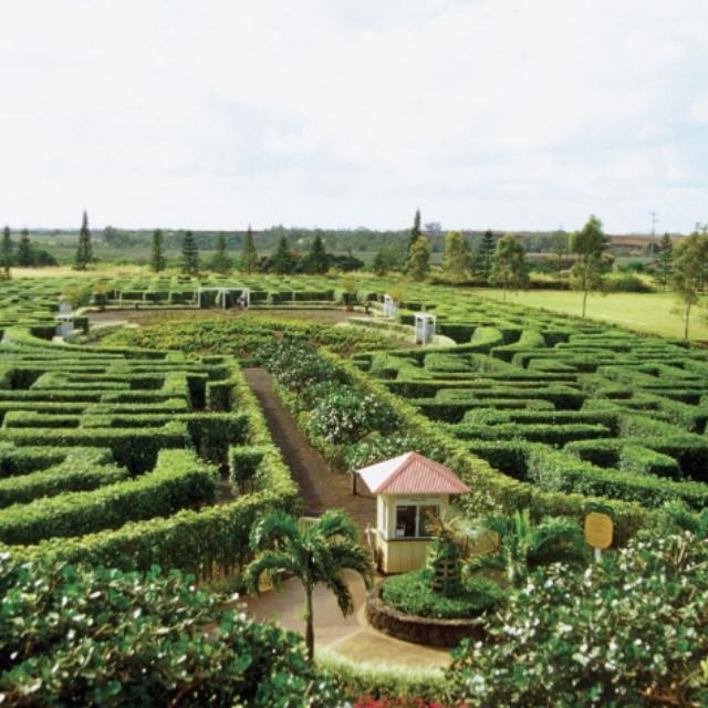 Pineapple Maze at Dole Plantation