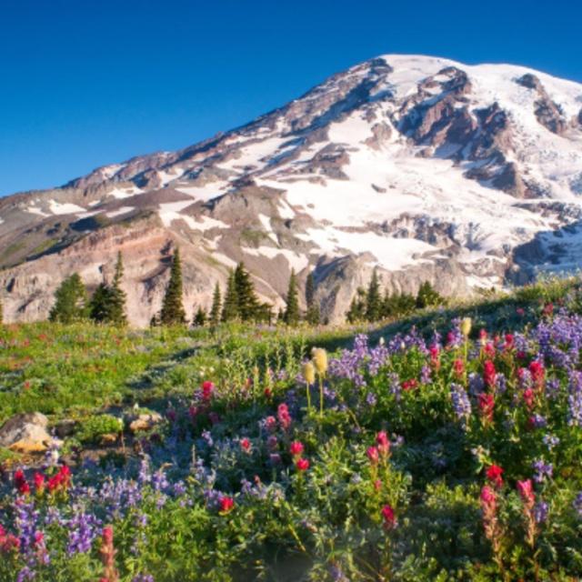 Climb Mount Rainier