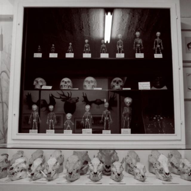 Museum Stemmler