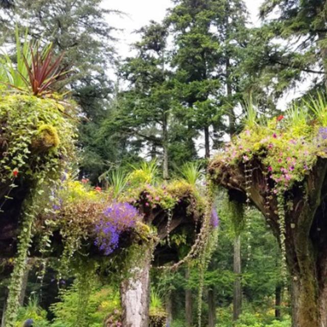 Glacier Gardens Rainforest in Juneau