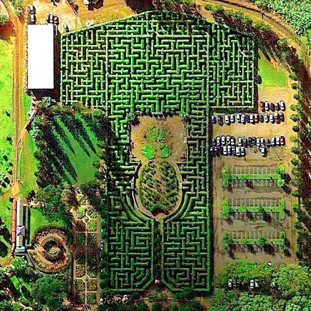 Get Lost in the Pineapple Maze