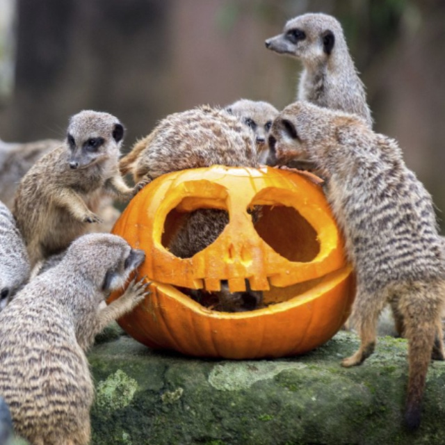Trick or Treat at the Zoo