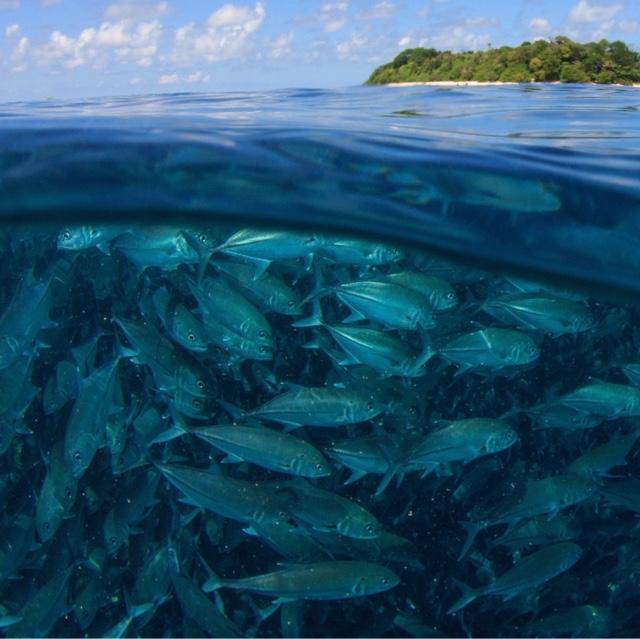 Swim in all Five Oceans