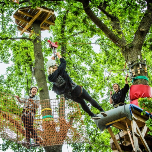 Discover the Climbing Forest