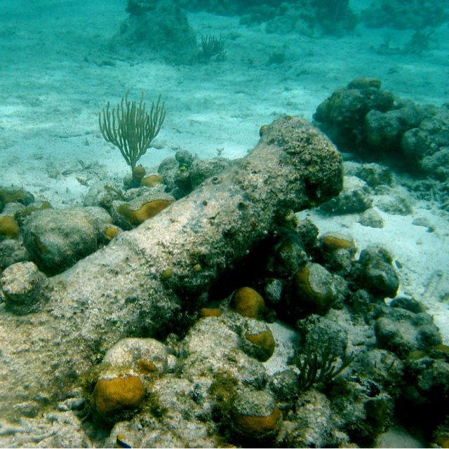 Look for the Submerged Cannons of Fort George