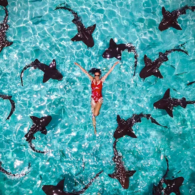 Swim with Sharks at Compass Cay