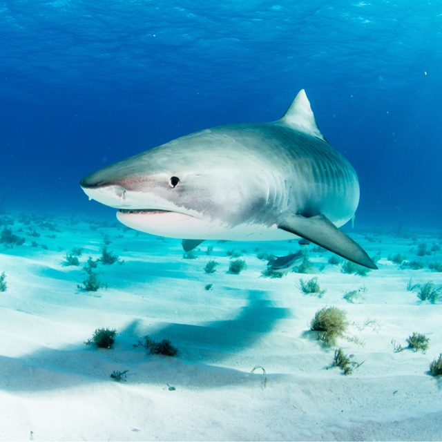 Swim in the Shark Park