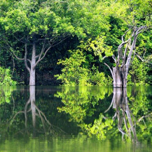Explore Amazon Rain Forests