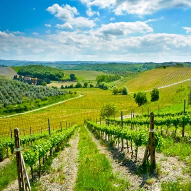 Vespa Ride Through the Tuscany Countryside