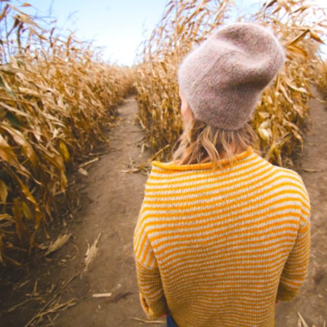 Escape a Corn Maze