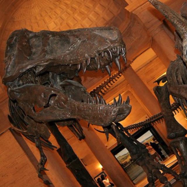 Dinosaur Hall at the Natural History Museum