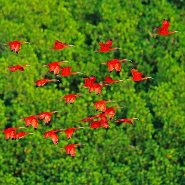 Caroni Bird Sanctuary in Trinidad