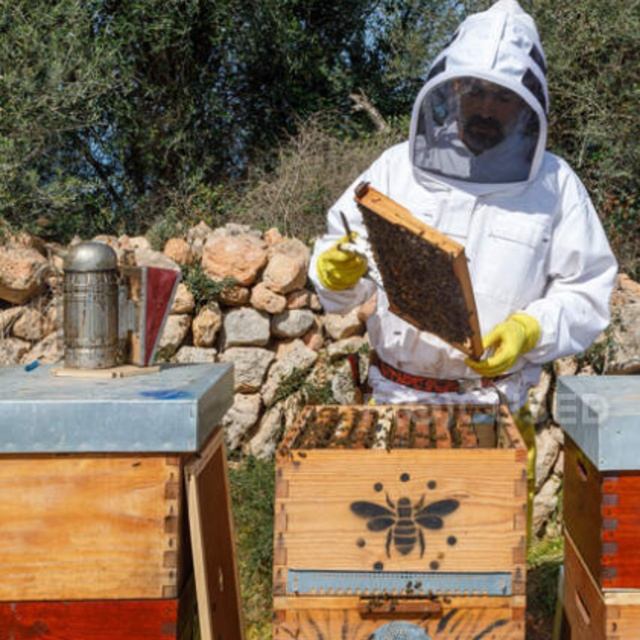 Harvest Honey from Beehives