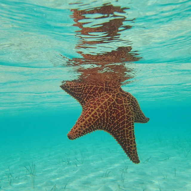 Visit the Starfish Reserve