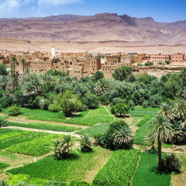Oasis in Dades Valley