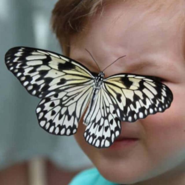 The Butterfly Farm Aruba